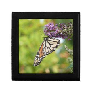Monarch-Schmetterling auf lila Schmetterling Bush Erinnerungskiste