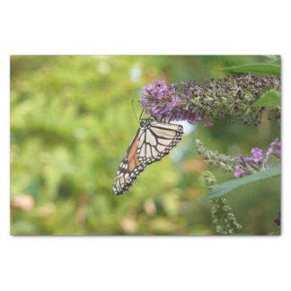 Monarch-Schmetterling auf lila Schmetterling Bush Seidenpapier