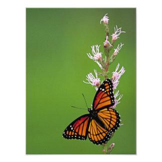Monarch-Schmetterling und Blume auf grünem Fotodruck