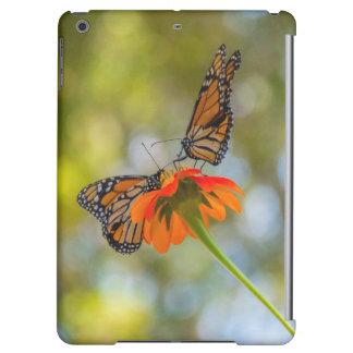 Monarch-Schmetterlinge auf Wildblumen