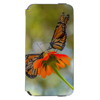 Monarch-Schmetterlinge auf Wildblumen Incipio Watson™ iPhone 6 Geldbörsen Hülle