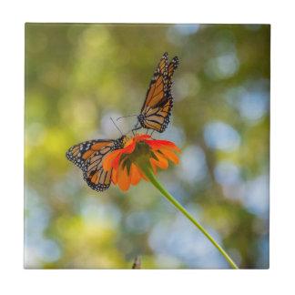 Monarch-Schmetterlinge auf Wildblumen Keramikfliese