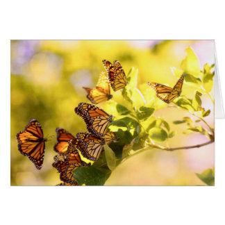 Monarchen im Sonnenlicht Karte