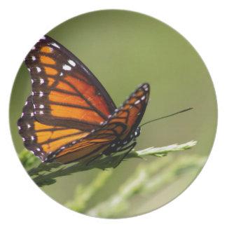 Monarchfalter auf Wacholderbusch Teller