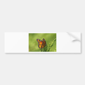 Monarchfalter - Danaus plexippus Autoaufkleber