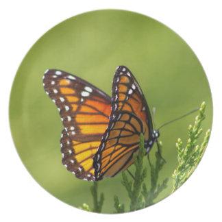 Monarchfalter - Danaus plexippus Teller
