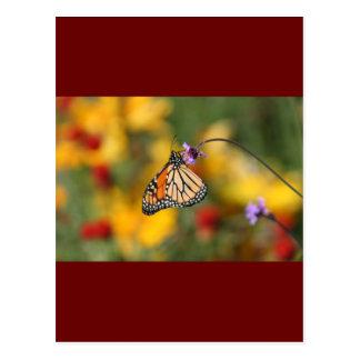 Monarchfalter-Halt für Blütenstaub Postkarte