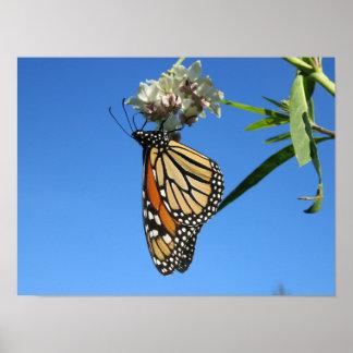 Monarchfalter mit blauem Himmel - Poster
