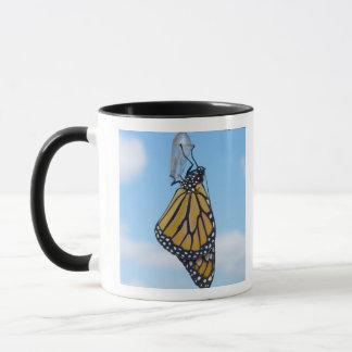Monarchfalter, mit Puppe Tasse
