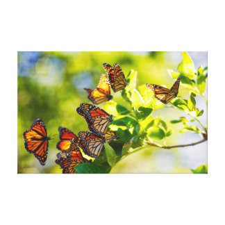Monarchfalter-Ruheplatz Leinwanddruck