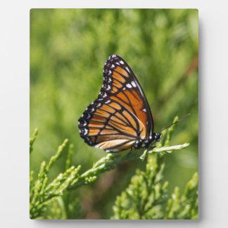 Monarchfalter-Schönheit Fotoplatte