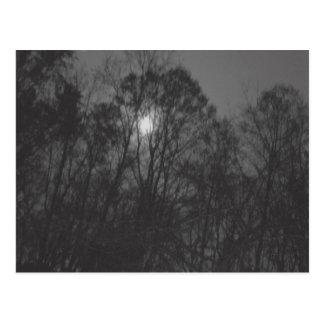 Mond u. Baum-Postkarte Postkarte