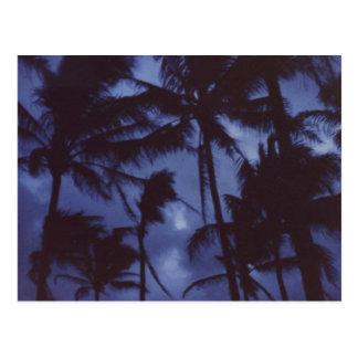 Mondschein PalmTrees Postkarte