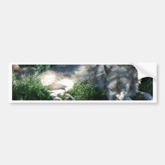 Montana-Schlafenwolf Autoaufkleber