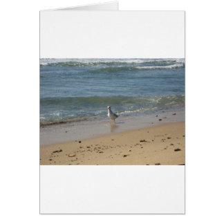 Montauk Strand-Seemöwe-Liebe Karte