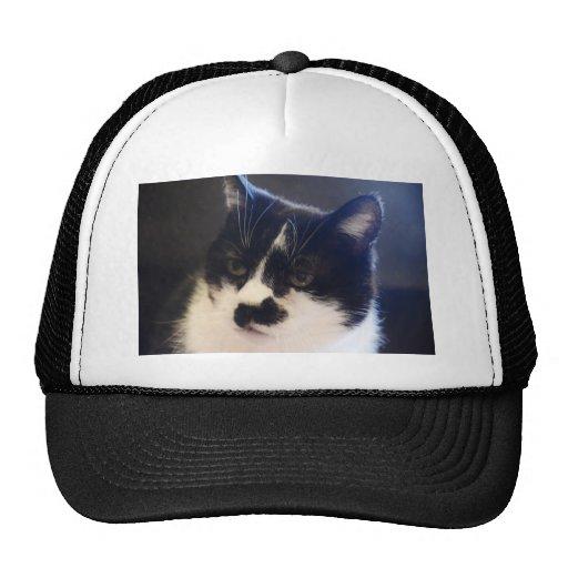 Monty Katze Cap