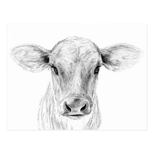 Moo Eine Junge Jersey Kuh Postkarte Zazzle