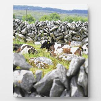 MOO-Kühe Fotoplatte
