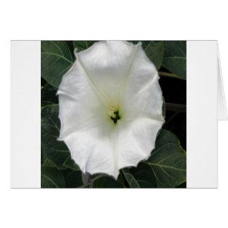 moonflower grußkarte