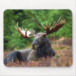 Moooose! Mauspad