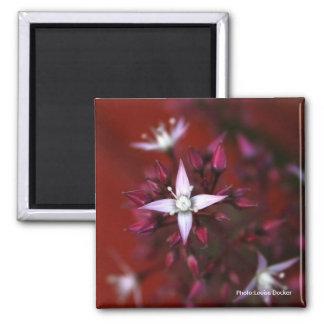 Moosbeerroter und weißer Blumen-Magnet Quadratischer Magnet