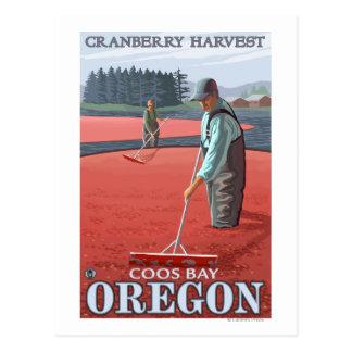 Moosbeersumpf-Ernte - Gurren-Bucht, Oregon Postkarte