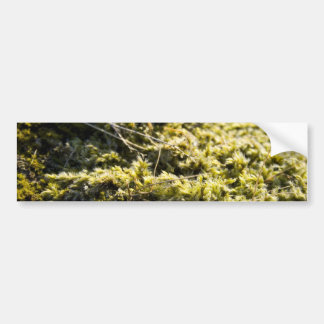 Moosiges Grün Autoaufkleber