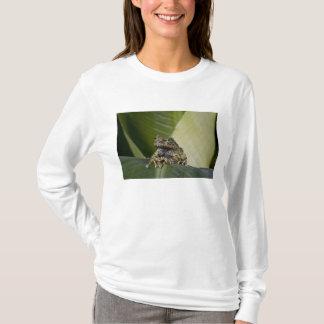 Moosiges Treefrog, Theloderma corticale, gebürtig T-Shirt