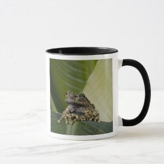 Moosiges Treefrog, Theloderma corticale, gebürtig Tasse