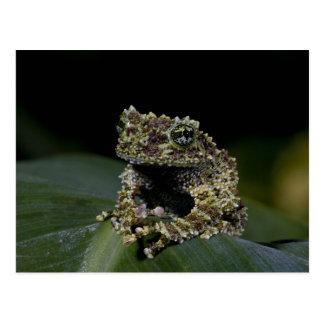 Moosiges Treefrog, Theloderma corticale, Postkarte