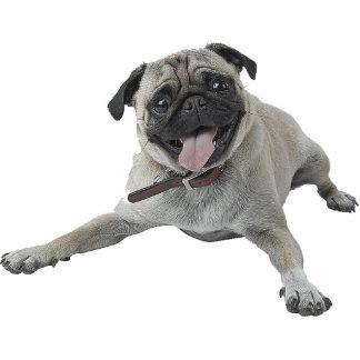 Mops-Hund Fotostatuen