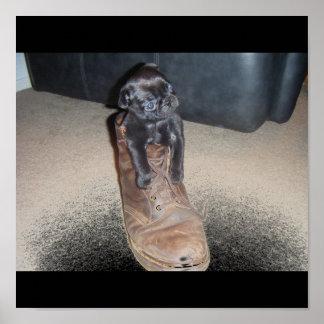 Mops in einem Stiefel Posterdruck