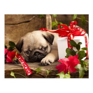 Mops-Welpe und Geschenkboxen Postkarte