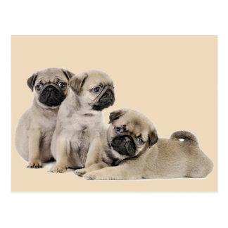 Mops-Welpen-Hunde Postkarte