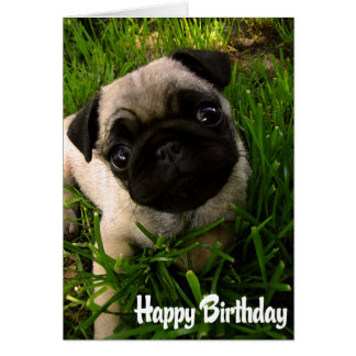 Mops-Welpen-Hundealles- Gute zum Geburtstagkarte - Karte
