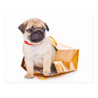 Mops-Welpen-Hundegruß-Postkarte Postkarte