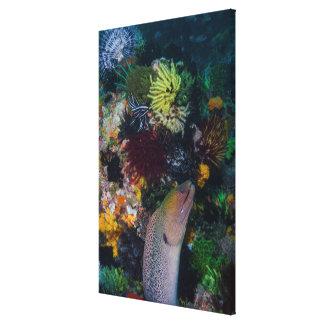 Moray-Aal und Koralle Leinwanddruck