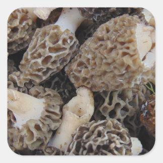 Morchel-Pilze Quadratischer Aufkleber