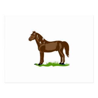 Morgan-Pferd Postkarte