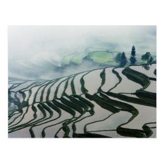 Morgen-Nebel über Reis-Feldern Postkarte