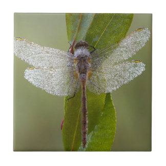Morgen-Tau-Libelle Keramikfliese
