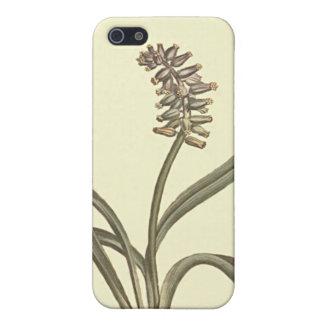 Moschus-Trauben-Hyazinthen-botanische Illustration iPhone 5 Cover