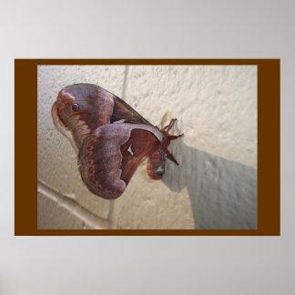 Motte auf einer Wand Poster