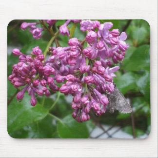 Motte auf lila Blume Mousepad