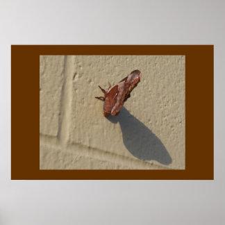 Motte auf Wand Poster