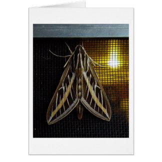 Motte und Glühlampe Karte