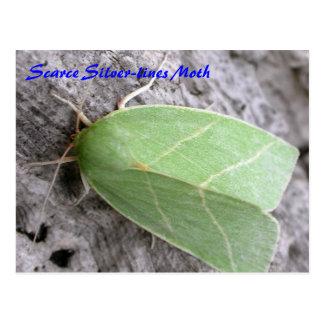 Motten-Magie: Knappe Silber-Linien Mottenpostkarte Postkarte