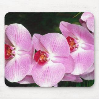 Motten-Orchidee Mauspads