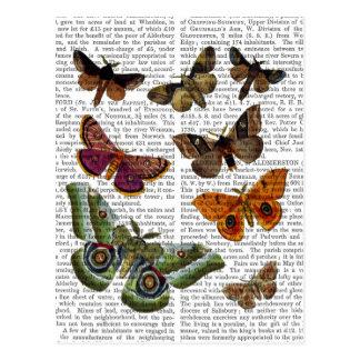 Motten-Platte 3 Postkarte