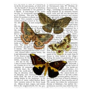 Motten-Platte 4 Postkarte